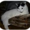 Chleb pszenno - żytni na zakwasie pszennym i drożdażch - ostatni post przez Mariusz_d1